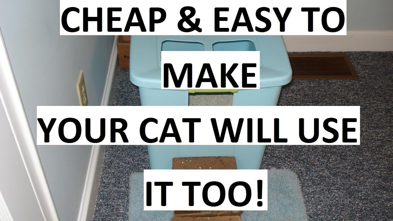 how to get cat to litter bo