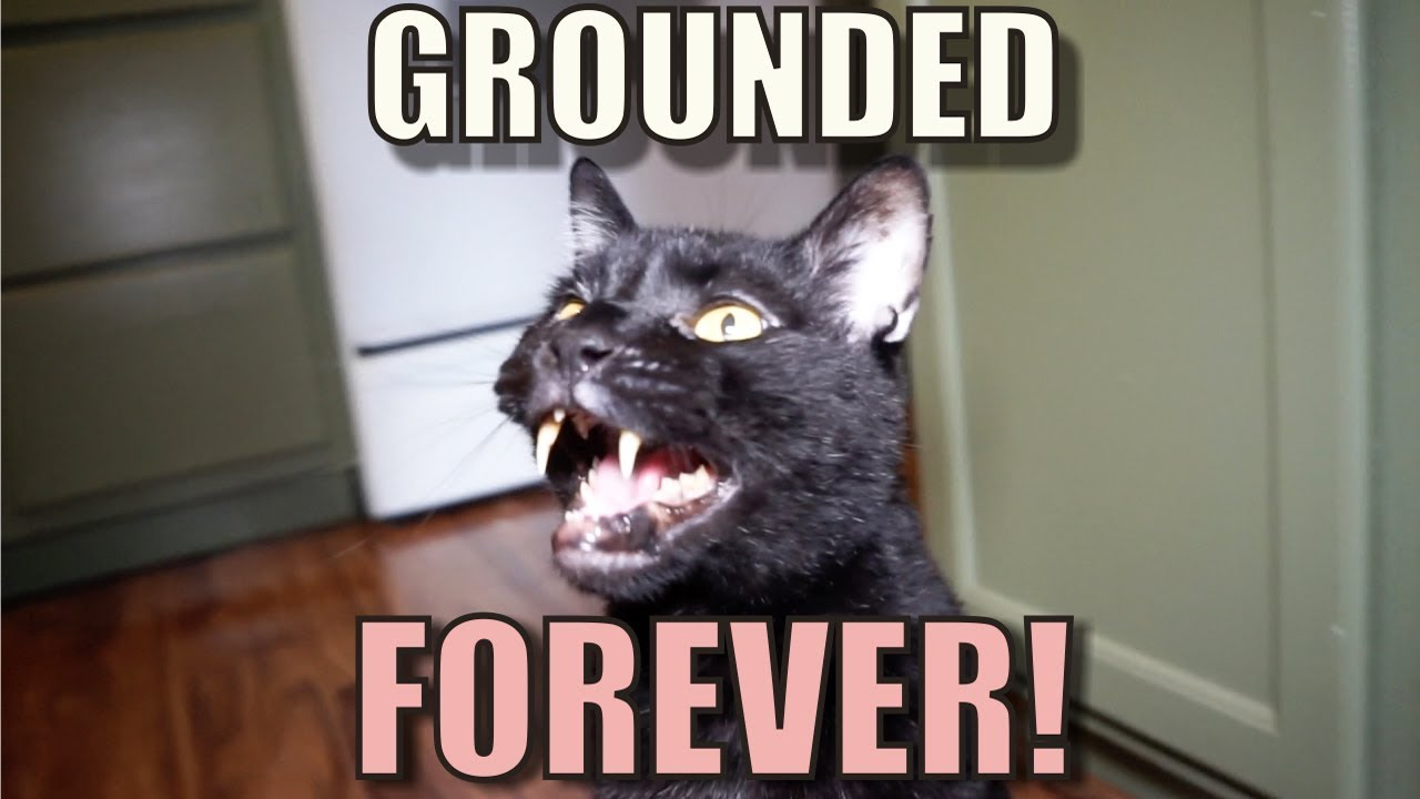 talking-kitty-cat-59-grounded-forever