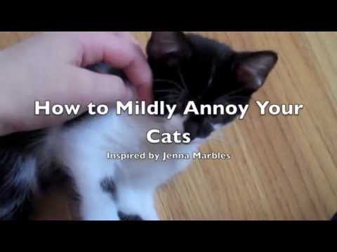 How to Mildly Annoy your Cats