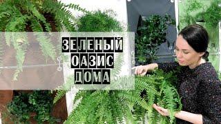 видео Красочные композиции вертикального озеленения