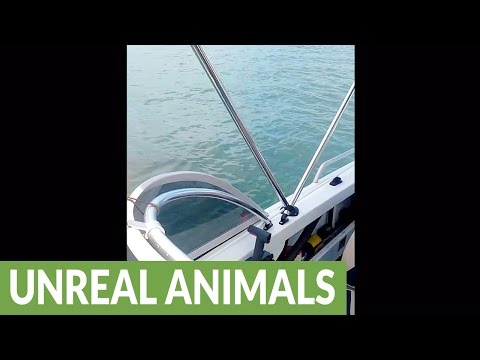 Great White Shark Circles Boat, Puts Family On Edge