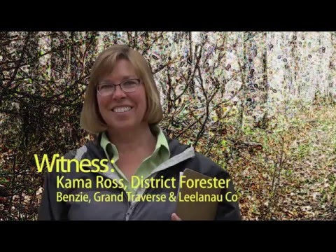 Witness:  Kama Ross, District Forester