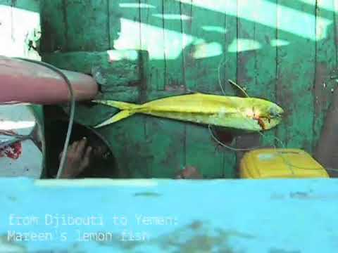 from Djibouti to Yemen: Mareen's lemon fish
