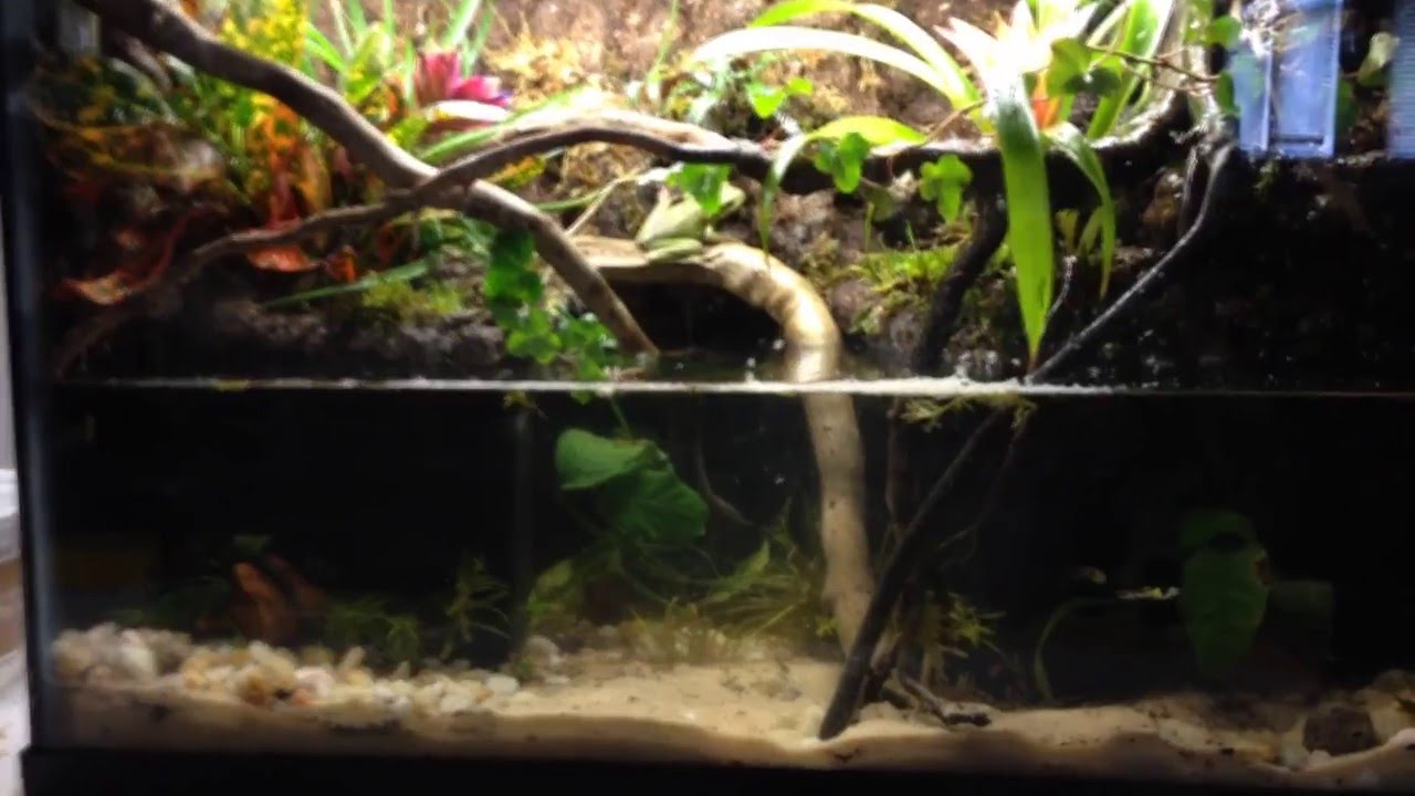 Pittbully's 10 Gallon Paludarium - YouTube 10 Gallon Paludarium