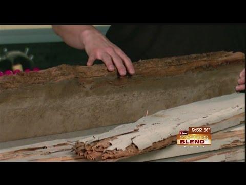 Top Spots for Termites