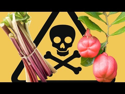 8 Insanely Dangerous Foods That People Actually Eat