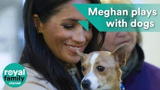 Meghan plays with dogs as new patron of animal charity