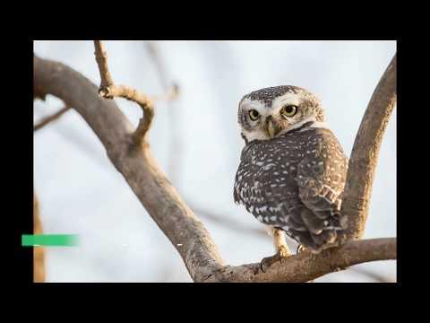Rare Birds Of Gujarat   Endangered Birds Species   Wildlife Of India