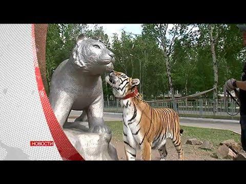Телемикс Новости. 22 мая 2017 г.