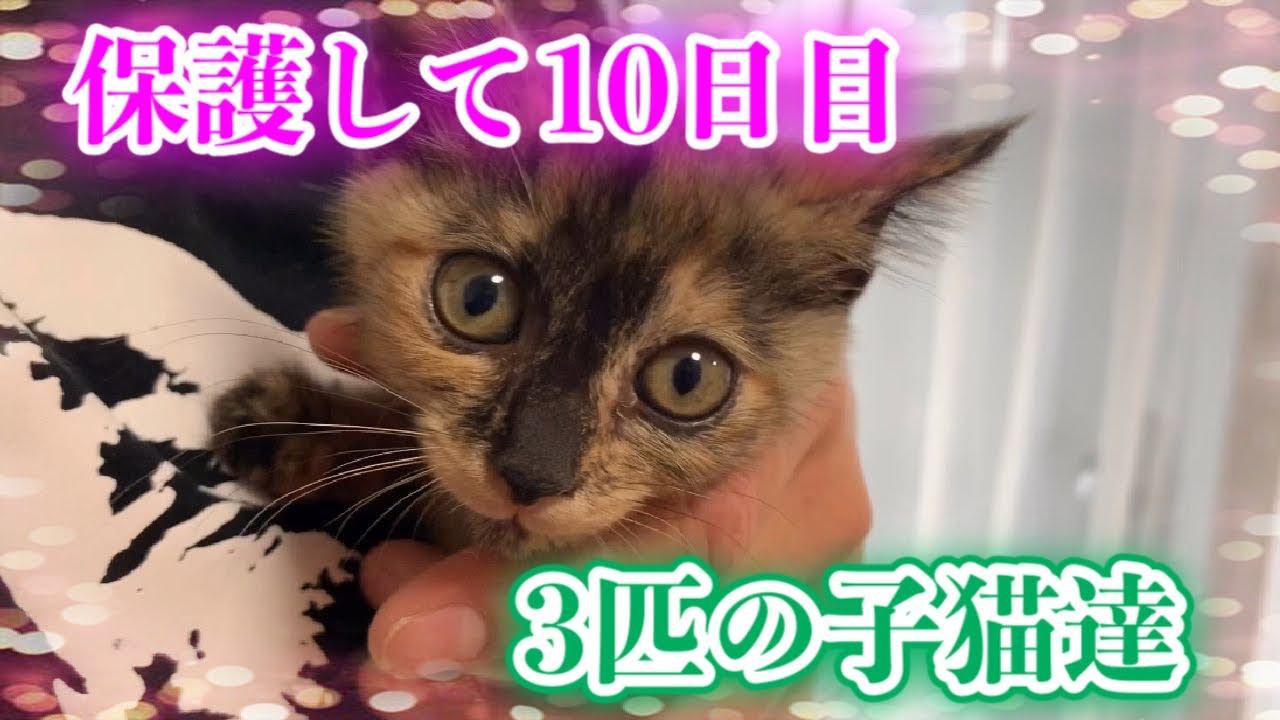 ガリガリだった子猫達を保護して10日目の様子です!【It's the tenth day since we rescued kittens】