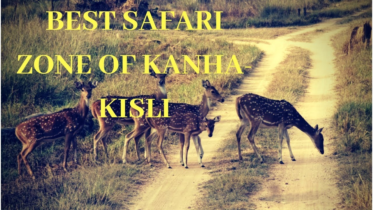 Best safari zone Kanha National Park: Kisli, Mukki, Kanha (Hindi)