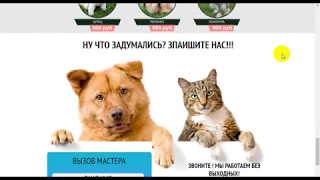 Сайт стрижки собак