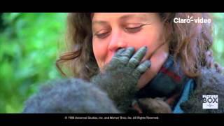 Gorilas en la niebla pelicula completa en español