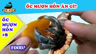 Ốc mượn hồn #8 - Ốc mượn hồn ăn gì? (Hermit crab #8 - What hermit crabs eat?) - YouTube