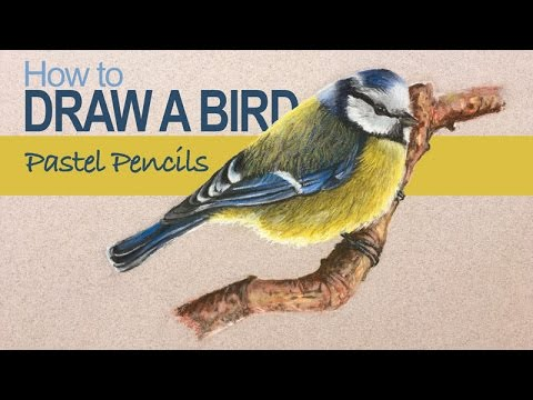 Pastel Pencils - How To Draw A Bird
