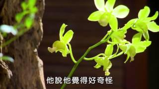 中華花藝 李麗淑 - 佛心花海.幽蘭滿澗香