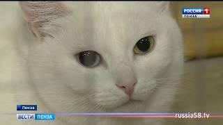 В Пензе представили самых дорогих кошек мира