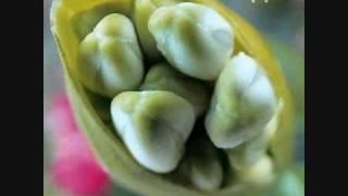 Fiona Apple - Please, Please, Please (unreleased version)