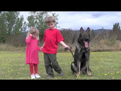 children-with-kraftwerk-k9-trained-versatility-protection-german-shepherd