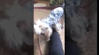 Собака кусаэт ноги
