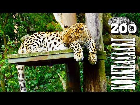 Helsinki Zoo Korkeasaari in 1080i with Sony DSC-HX90V and FDR-X3000R + Feiyu Tech G3 GS