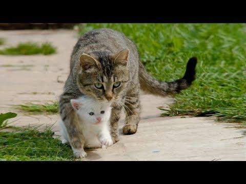 Спасение несчастных животных от гибели ...