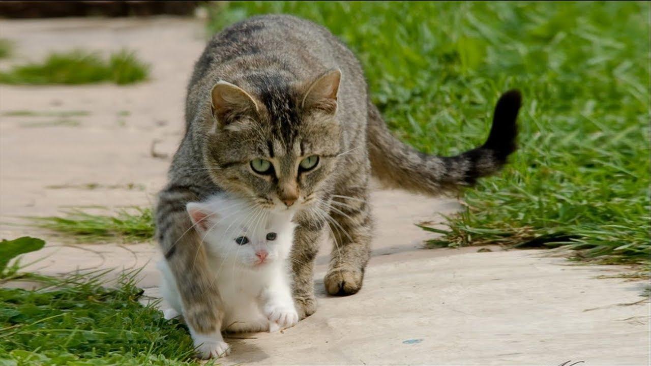 Ты обиделась картинка с кошкой и надписью, открыток евгении открытки