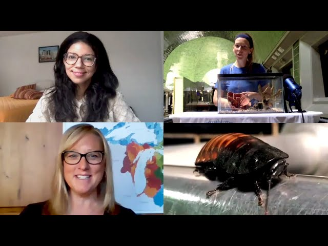 Hissing Cockroach Loves Popcorn - Facebook Watch Party - Great Lakes Now and the Belle Isle Aquarium