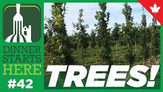 Tree Farming in the GTA - Dinner Starts Here (Farm 42)