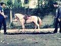 manusia kuda shapeshifter