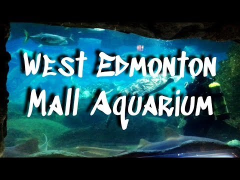 West Edmonton Mall Aquarium || Marine Life || Sea Lion Show