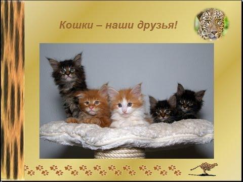 О животных для детей. Кошки