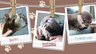 【コタロー1歳記念】 11/10に誕生日を迎えたコタローの1歳記念として...