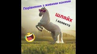 Схожі фото коней і шляйх