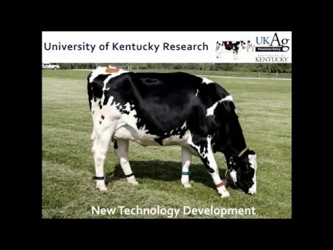 Precision Dairy Technologies – Opportunities and Challenges