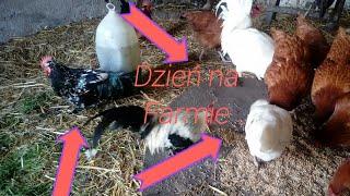 #11 Dzień na farmie