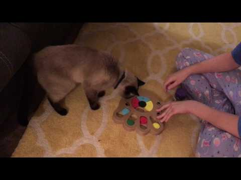 Cat IQ Test Toy! Teaching Siamese Cat Tricks