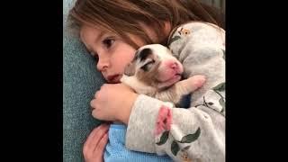 #9 Приколы с животными до слез 2019 смотреть ржака...