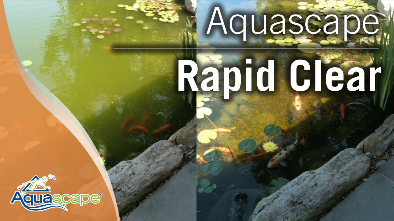 Clear pond water with aquascape rapid clear youtube for How to make koi pond water clear