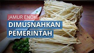 Mengandung Bakteri Listeria, Kementan Musnahkan Jamur Enoki Impor dari Korsel.