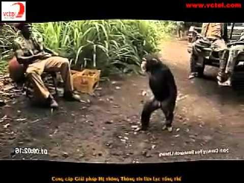 Khỉ Ape bắn súng AK47   YouTube