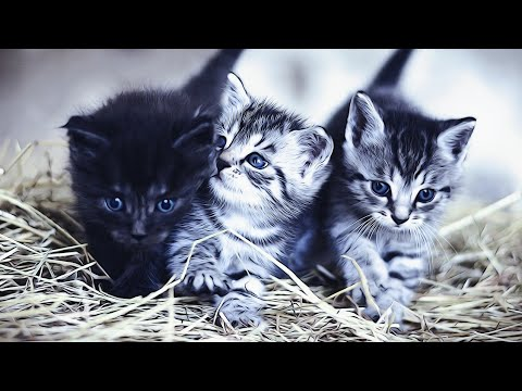 Cute And Funny cats compilation #Funny Pet Animals #2