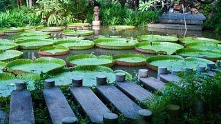 3 Hour Zen Meditation Music: Relaxing Music, Calming Music, Healing Music, Soothing Music ☯2405