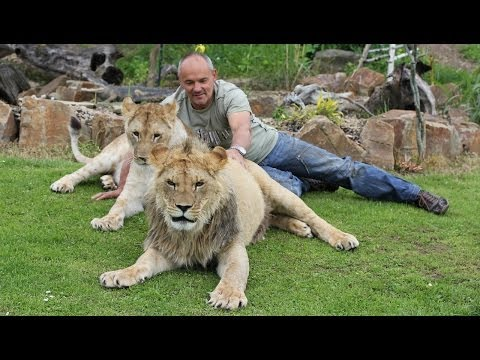 Preposterous Pets: Living With Lions