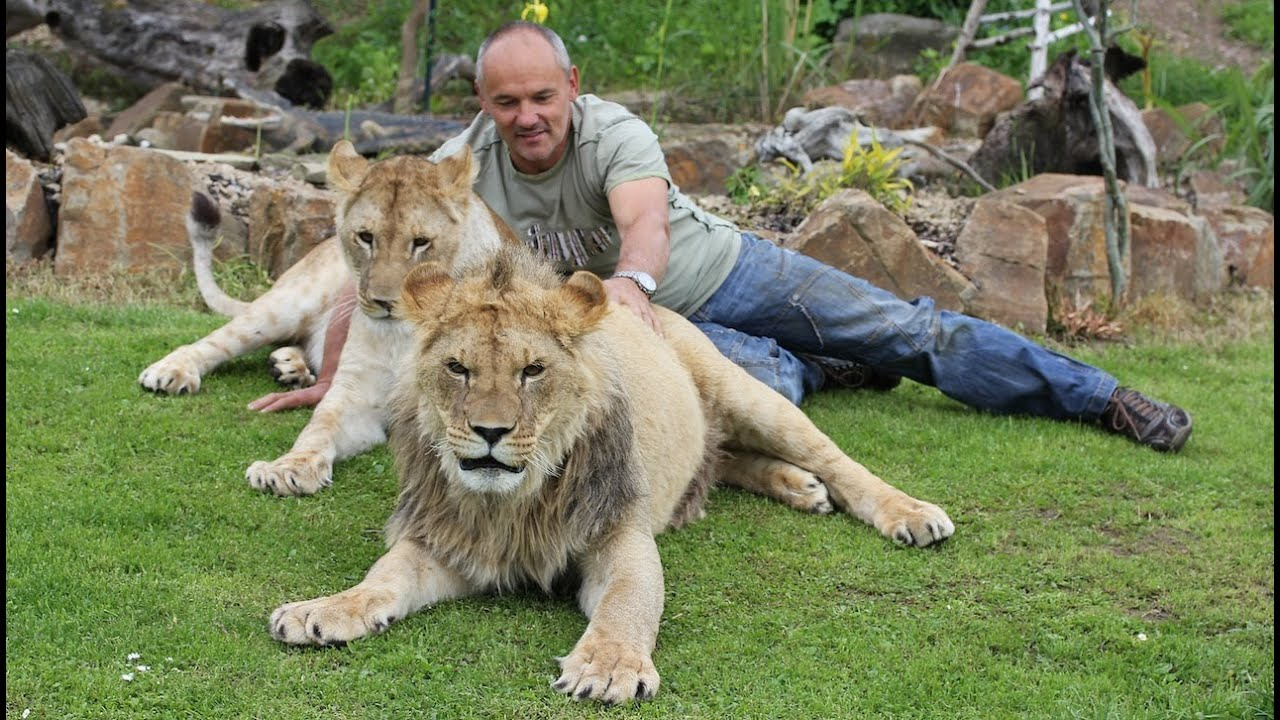 Pictures Of Cats And Dog And A Lions
