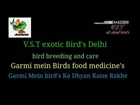 Garmi Mein Birds Ka Dhyan Kaise Rakhe food ,medicine's and care