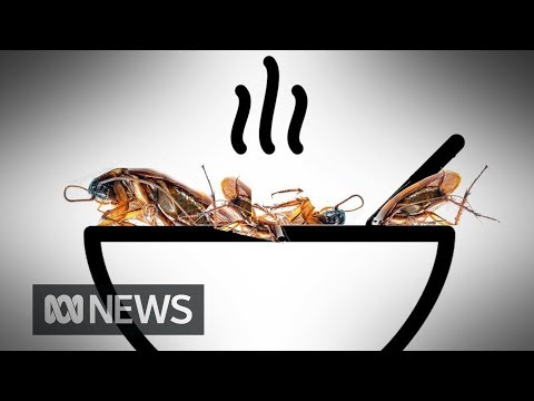 Are you ready to eat insects for lunch?   ABC News