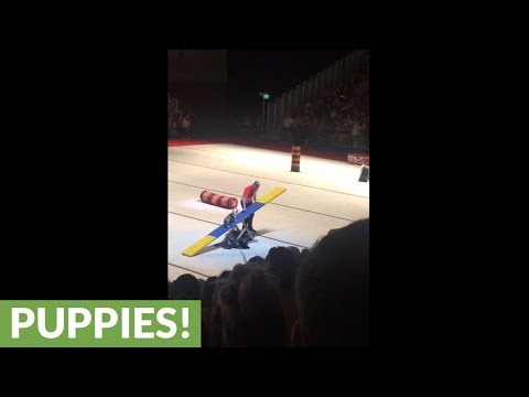 Talented pup at dog show dominates obstacle course