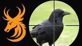 Long range corvid shooting with a .17 HMR Ruger 77/17