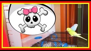 Хомяк и попугай🐹➕🐤Дружба Хомяка и Попугая - ЗА и ПРОТИВ #Животные